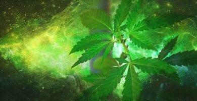 invertir en cannabis 2019